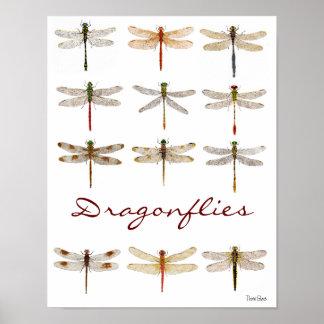 12 Libellen-Spezies Poster