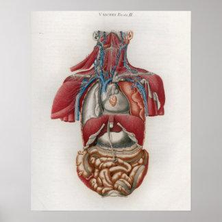 1833 Vintages Organ-Organ-Anatomie-Plakat Poster
