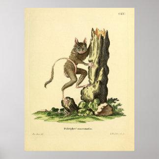 1840'sillustration von einem Tarsier Poster