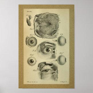 1850 Vintager Anatomie-Druck-menschliches Auge Poster