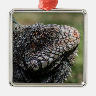 1920px-Iguanidae_head_from_Venezuela Silbernes Ornament