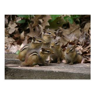 5 BabyChipmunks Postkarte