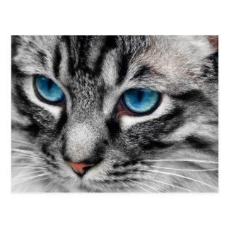 A-PAL - Silberne Tabby-Katze mit blaue Augen-nahem Postkarten