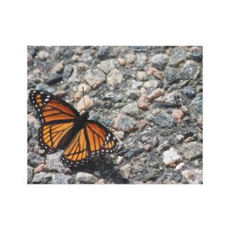 Aalender Monarch Leinwanddruck