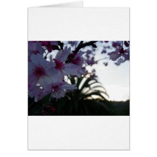 Abends-Kirschblüten Karte