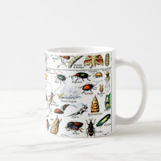 Adolphe Millots Insectes Tasse