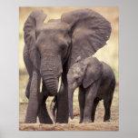 Afrika, Tansania, Tarangire Nationalpark. 2 Plakat