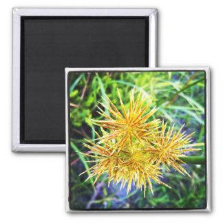 Afrikanische Gras-Blume Quadratischer Magnet
