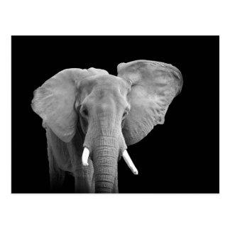 Afrikanischer Elefant auf Schwarzem - Postkarte