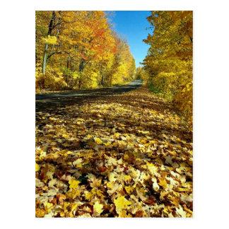 Ahorn-Blätter und Vermögens-Allee, Gatineau Park, Postkarte