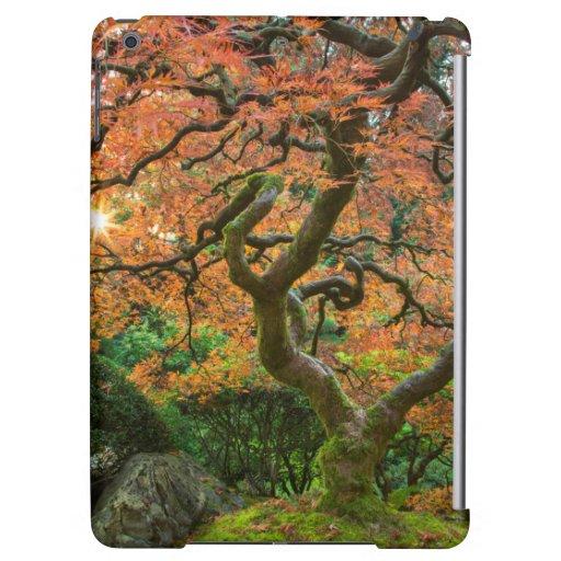 Ahornbaum an den Japaner-Gärten im Herbst