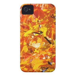 Ahornbaum-Herbst-Blätter iPhone 4 Case-Mate Hülle
