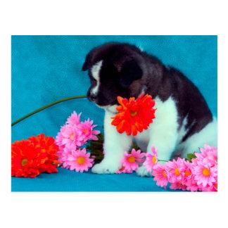 Akita-Welpe mit Blumen Postkarte
