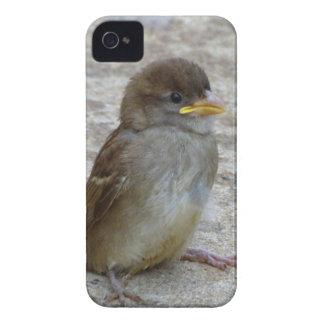 Allein Case-Mate iPhone 4 Hülle