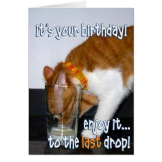 Geburtstagswunsche fur frauen mit katzen