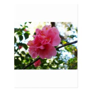 Alles Liebe zum Muttertag Postkarte
