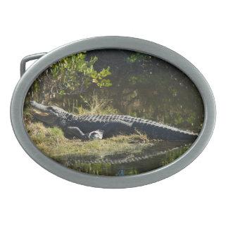 Alligator im Sun Ovale Gürtelschnallen
