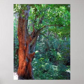 Alter Mangobaum Poster