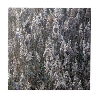 Altes Reedgras an einem Wintertag Kleine Quadratische Fliese