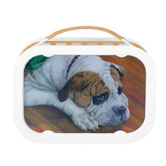 Amerikanische Bulldoggen-trauriger GesichtLunchbox Brotdose