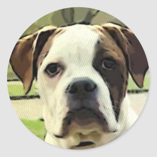Amerikanische Bulldoggenaufkleber Runder Aufkleber