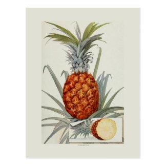 Ananas Postkarte