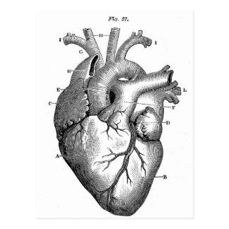 Anatomie-Herz-Bild-Vintag Postkarte