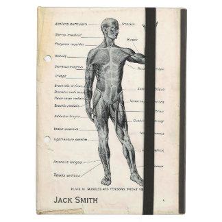 Anatomie-vorhergehende und hintere Vintage