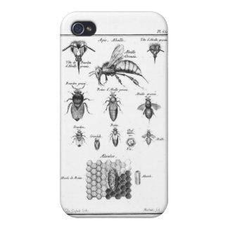 Antike Bienen u. Bienenwabe iPhone 4/4S Case