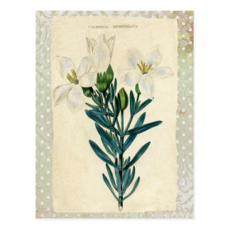Antike Osterlilie Postkarte