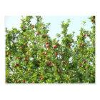 Apfelbäume Postkarte