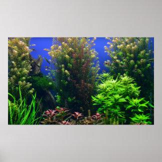 Aquarium für Aquarium-Hintergrund Poster