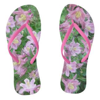 Aquilegia Blumen-Erwachsener drehen Reinfälle um Flip Flops
