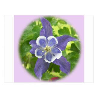 Aquilegia Columbine Blumen-Postkarte Postkarte