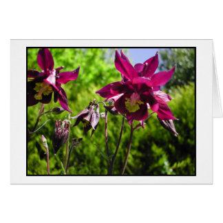 Aquilegia. Lila Blumen der Pflaume Karte