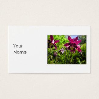 Aquilegia. Lila Blumen der Pflaume Visitenkarte