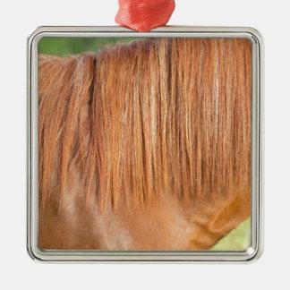 Arabisches braunes Pferd in der nahen Ansicht der Silbernes Ornament
