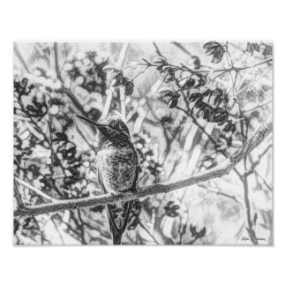 Archivalischer Mattplakat-Druck des Kolibri-14x11 Poster
