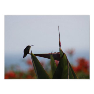 Archivalisches Mattplakat des Kolibri-Foto-16x12 Poster