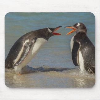 Argumentierende Pinguine, Falklandinseln Mousepad
