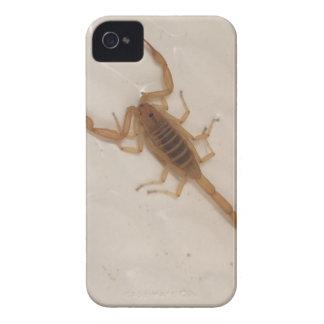 Arizona-Barken-Skorpion iPhone 4 Cover