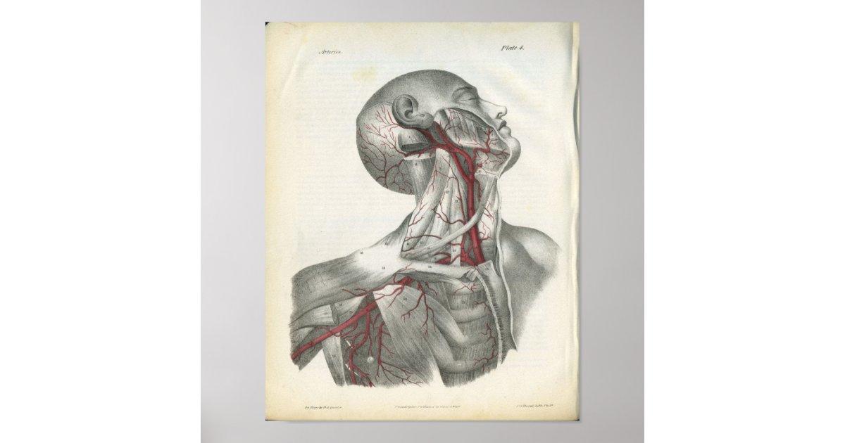 Charmant 3d Kopf Und Hals Anatomie Fotos - Anatomie Ideen - finotti.info