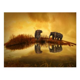Asiatische Elefanten in Thailand unter einem Postkarte