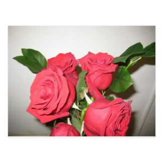 Atemberaubende Rote Rosen Postkarte