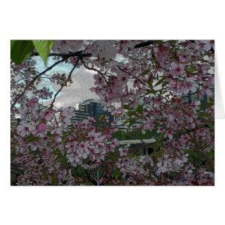 Auckland-Kirschblüten Karte
