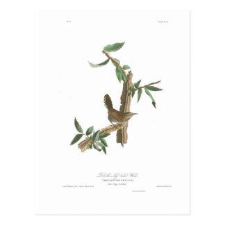 Audubon Platte 18 Bewicks Zaunkönig Postkarte