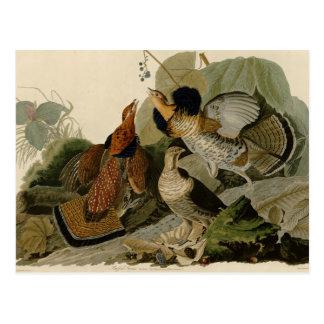 Audubons Malerei eines Trios Ruffed Waldhuhns Postkarte