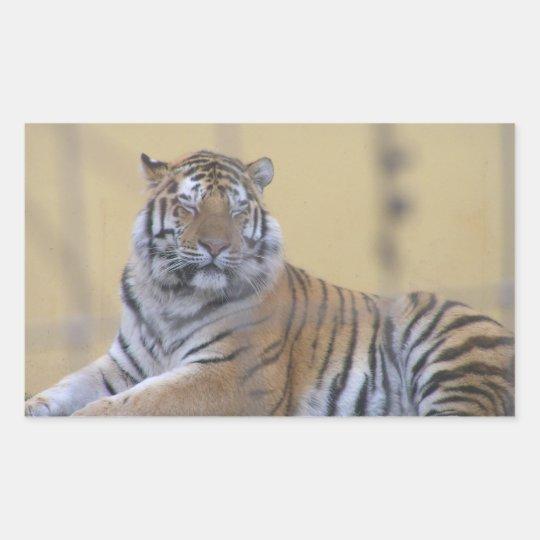 Aufkleber rechteckig, Tiger