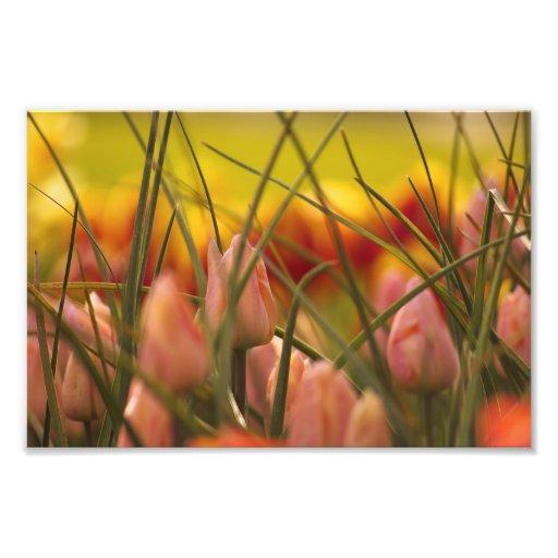 Auftauchender Frühling Kunstphotos