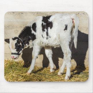 Baby-Kuh isst das Mittagessen in The Sun Mauspads